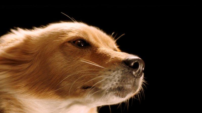 mulb dogs 01.jpg