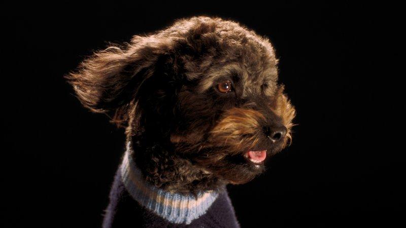 mulb dogs 03.jpg